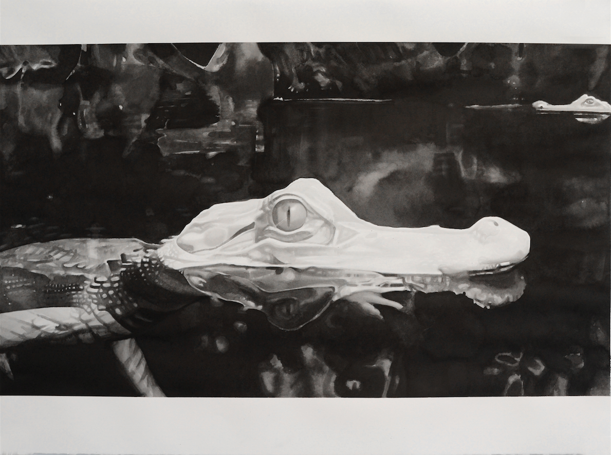 Albino Crocodile (Cave of Forgotten Dreams), 2014. Ink on paper. 22 x 30 inches.